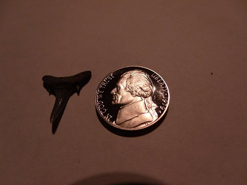 1979 S  Proof and Free Tooth
