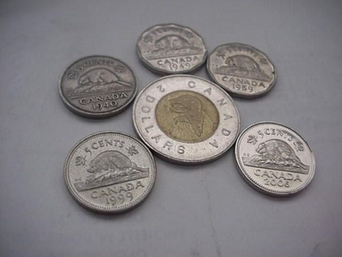 5-canada nickels and a 2 dollar bear coin..