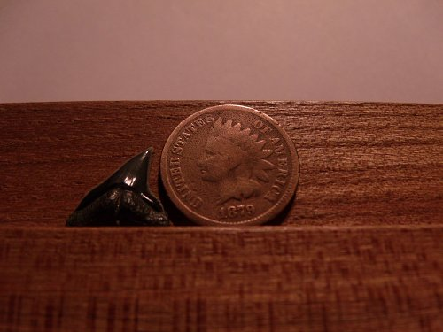 1879 P Indian Head Penny#3