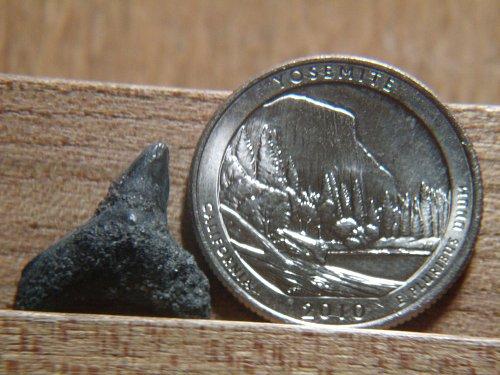 2010 P Yellowstone