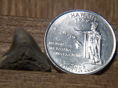 2008 P Hawaii
