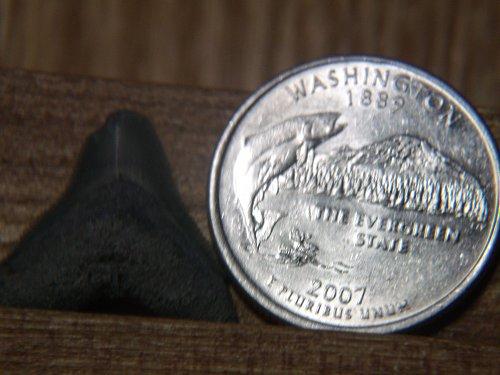 2007 P Washinton