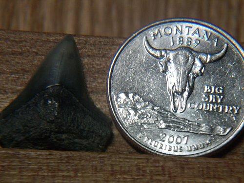 2007 D Montana #2