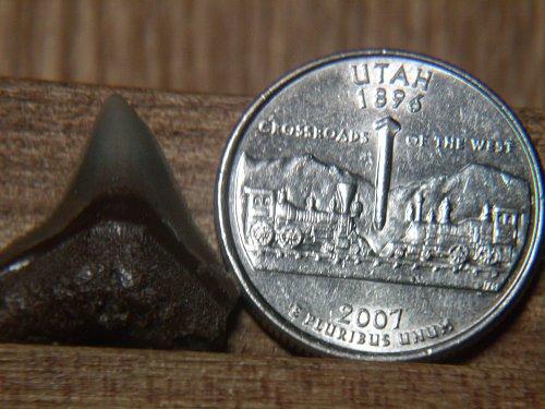 2007 P Utah