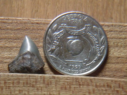 1999 P Georgia