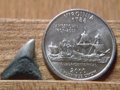 2000 D Virginia