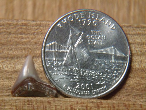 2001 D Rhode Island