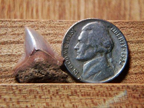 1952 P Jefferson Nickel