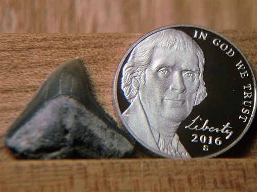 2016 proof Jefferson Nickel