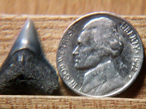 1972 D Jefferson Nickel #2