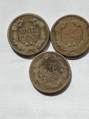 3 Flying Eagle Cents